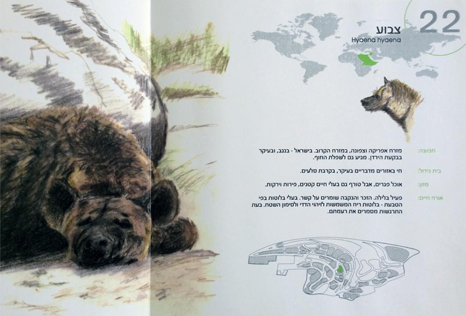 עיצוב חוברת ומפת גן החיות הלימודי