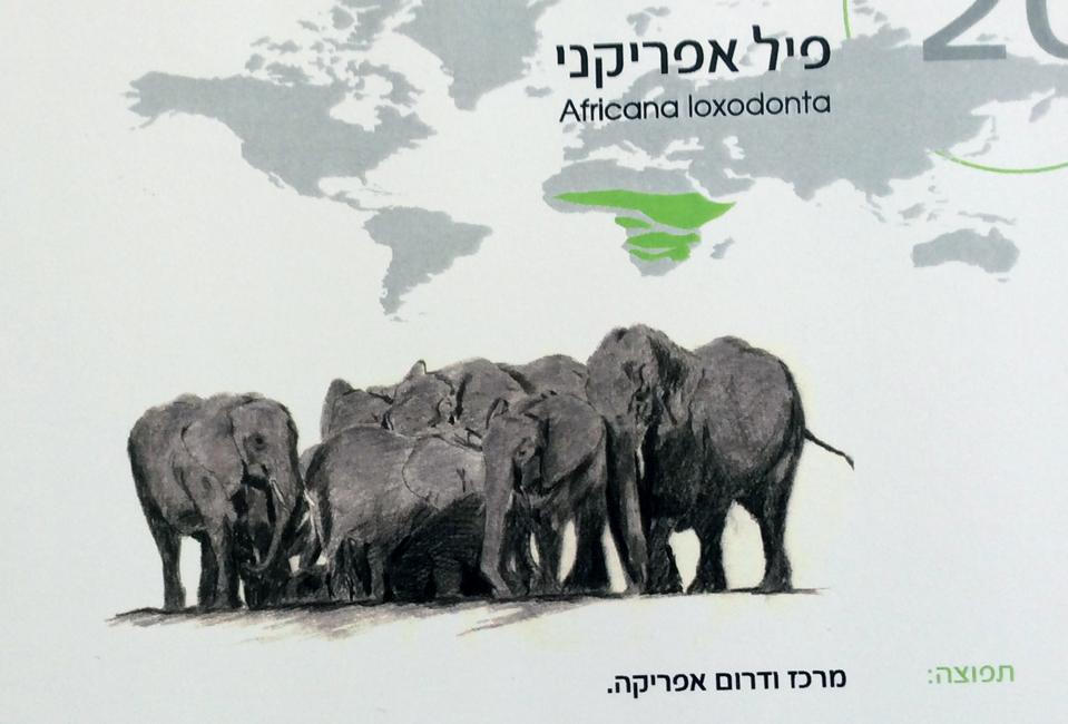 עיצוב חוברת חיות לגן החיות הלימודי